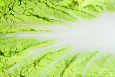 Free Close-up Of Cabbage Leaf Royalty Free Stock Photos - 9062438