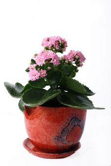 Free Plant In A Flowerpot Royalty Free Stock Image - 9062446