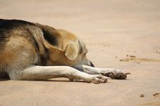 Lazy Dog On Beach Stock Image