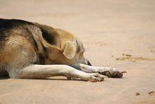 Lazy Dog On Beach Stock Image