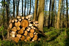 Free Truncate Wood Royalty Free Stock Images - 9063419