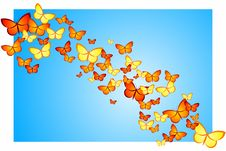 Free Butterfly Swarm Royalty Free Stock Photo - 9063515