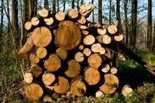 Free Truncate Wood Stock Image - 9063591