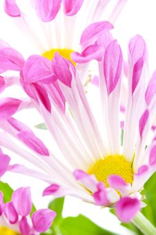 Free Pink Flowers Stock Photography - 9063912