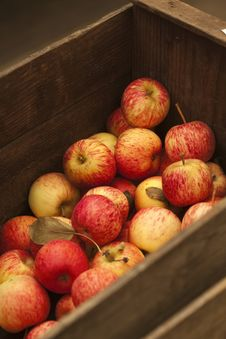 Free Fresh Picked Apples Royalty Free Stock Photos - 9067778