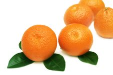 Free Tangerines. Royalty Free Stock Photography - 9069677
