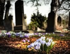 Free Purple Crocus In Bloom During Daytime Stock Photography - 90612222