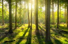 Free Sun Rays In Forest Stock Photo - 90613180