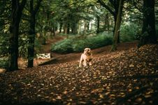 Free Dog In Forest Royalty Free Stock Image - 90613706