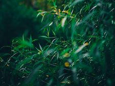 Free Green Leafy Plant During Daytime Stock Image - 90615391
