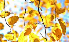 Free Branch, Leaf, Yellow, Autumn Stock Image - 90615551