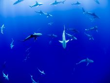 Free Group Of Sharks Swimming Under Blue Sea During Daytime Stock Image - 90659731
