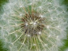 Free Dandelion Seed Head Royalty Free Stock Image - 90660726