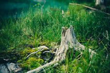 Free Tree Stump In Grasses Royalty Free Stock Image - 90660866
