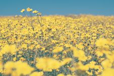 Free Yellow Flowers Stock Photo - 90660980