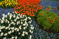 Free A Colorful Field Of Flowers Stock Photos - 9073013