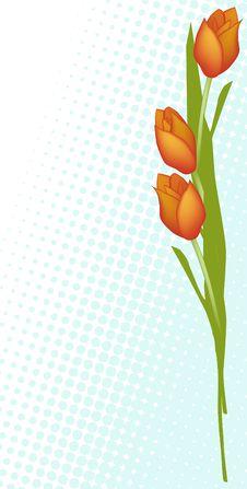 Free Tulips Stock Image - 9070731