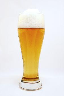 Free Fresh Beer Royalty Free Stock Image - 9071826