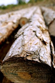 Free Lumber - Fallen Tree Royalty Free Stock Photo - 9072035