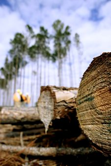 Free Lumber - Fallen Tree Stock Photos - 9072043