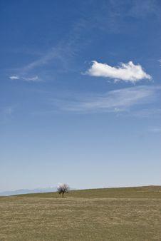 Free Alone Tree Stock Image - 9072521