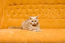 Free Cat On The Sofa Stock Images - 9073094