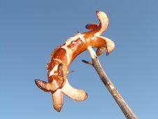 Free Sky, Close Up, Organism, Macro Photography Stock Photo - 90798710