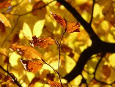 Free Leaf, Autumn, Deciduous, Flora Royalty Free Stock Photography - 90798747