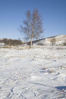 Free Tree On Snow Stock Photo - 9082630