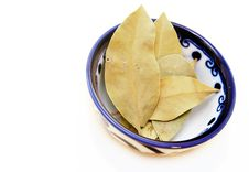 Free Bay Leaves Royalty Free Stock Images - 9083499