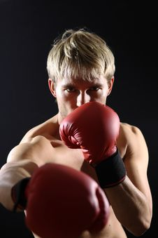 Free Young Boxer Stock Photo - 9084750