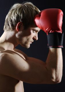 Free Young Boxer Stock Photo - 9084830