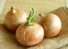 Free Onions On A Sacking, Closeup Royalty Free Stock Images - 9084989