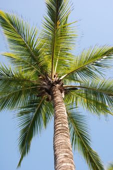 Free Palm Stock Photography - 9085002