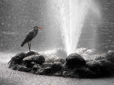 Free Heron And Water Jet. Royalty Free Stock Photos - 9085088