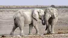 Free Elephant, Elephants And Mammoths, Wildlife, Terrestrial Animal Royalty Free Stock Images - 90930359