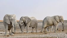 Free Elephant, Elephants And Mammoths, Wildlife, Terrestrial Animal Royalty Free Stock Photos - 90930378