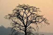 Free Tree At Dusk Royalty Free Stock Image - 90996066