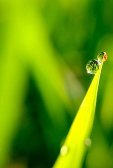 Free Beads Of Dew On Grass Stock Photos - 90996093