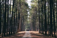 Free Road Through Forest Royalty Free Stock Images - 90997099