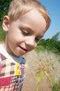 Free Child Looking At Big Blowball. Stock Photography - 910432