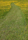 Free Pathway Through The Buttercups Stock Photography - 912662