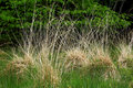 Free Contrasting Grasses Royalty Free Stock Image - 912976
