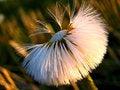 Free Last Moment Of The Dandelion Stock Image - 914681