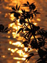 Free Evening Silhouette 2 Royalty Free Stock Photos - 914688