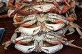 Free Fresh Crabs Stock Photos - 915203