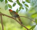 Free Pretty Bird Stock Images - 919634