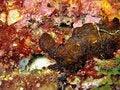 Free Tiny Red Shrimp Stock Image - 919641