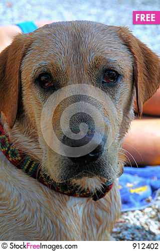 Free Dog In Shade Stock Photography - 912402