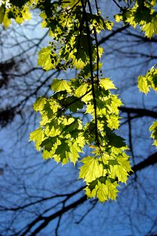 Free Spring Stock Images - 910074